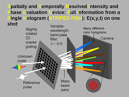 striped_fish_diagram