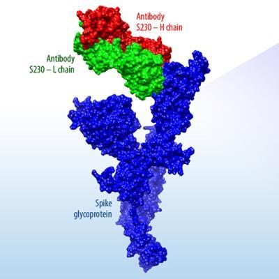 Coronavirus Protein Structure