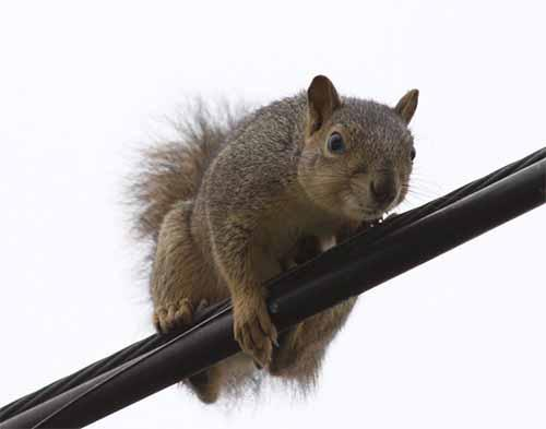 squirrel_lower.jpg