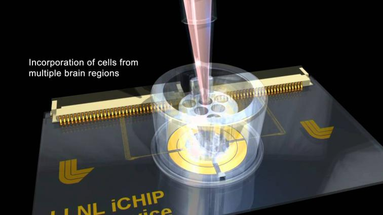 LLNL Brain-on-a-Chip